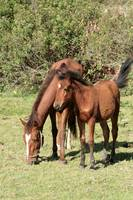 Brown Mare and Colt in a Meadow
