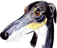 Quirky greyhound lurcher
