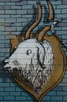 Goat mural Graffiti detail on the textured wall