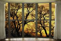 Golden Forest Bay Picture Window View