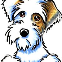 Badger Sealyham Terrier