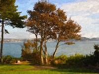 Trees at Torbay, Devon