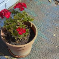Geraniums on Blue Porch by Faye Cummings