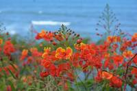Red flowers at the ocean