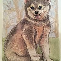 Wolf Pup (c)2014 Art Prints & Posters by Lauren Curtis