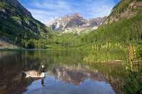 Colorado Images - Maroon Bells and a Canada Goose
