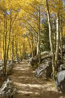 Colorado Images - Aspen Path, Rocky Mountain Natio