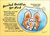 Bowled Goldfish Go Mad