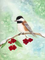 Winter Chickadee