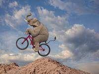 Elephant-Mountain-Biking