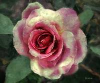 Ragged Satin Rose