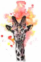 Smiling Giraffe Animal Portrait