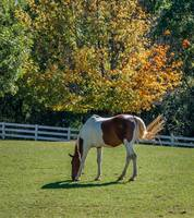 Painted Horse in Autumn