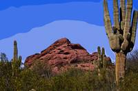 Red Rock Cactus by Kirt Tisdale