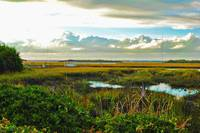 Autumn Marsh - Sullivans Island