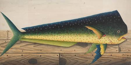 Mahi-Mahi Fish artwork