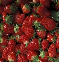 Bushel of Strawberries