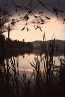 Beaver Lake weeds #6 by Joe Gemignani