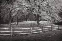 Country Fence (Browntone_)