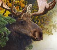forest garland bull moose in autumn