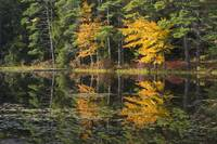 Fall Colors, New England Pond