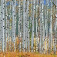 """""""Art Of Autumn"""" by artsandi"""