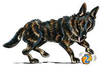 German Shepherd Dax