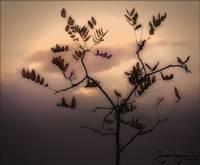 Autumn Dreams by Joe Gemignani