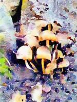 Bundle of Mushrooms