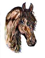Horse head colorful watercolor