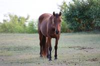 Perfect brown horse
