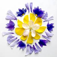 Mandala Blessing of the Pansy and Apple Flower