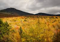 Rustic Autumn At Franconia Notch