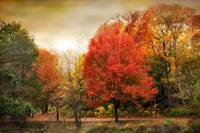 Fall Aflame