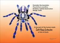 Consider the Tarantula