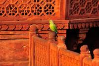 Green Parrot On Red Stone