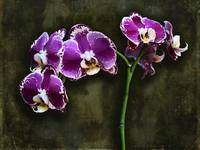 Purple Orchids by Giorgetta Bell McRee