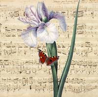 iris and butterfly music