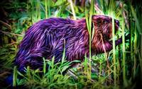 Beaver in Reeds