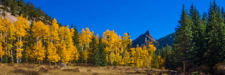 Aspens in the Crags