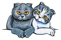 Scottish Fold Pair