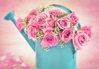 A bouquet of mauve roses in a teal watering can