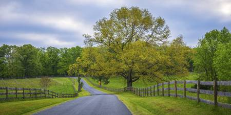 Virginia Country Road