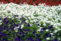 Patriotic Colors by Wendy Ritch