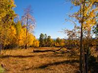 Fall aspens on the Chilcotin Plateau with the Coas