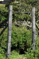 Gate in a Barbed Wire Fence