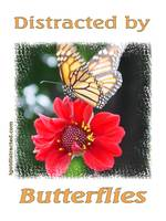 Distracted by Butterflies 600-butterfly-dsc04167-d