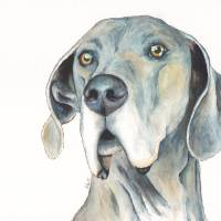 Major the Super-Sized Supporter Blue Dane Art Prints & Posters by Melissa