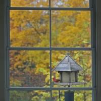 Autumn Window with Cardinal by Karen Adams