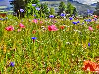 Colorado mountain scenic flower print